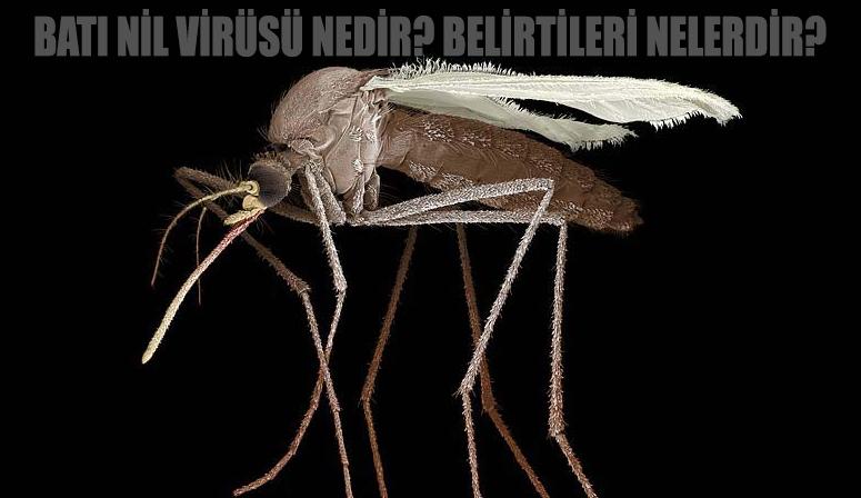 Batı Nil Virüsü nedir? Batı Nil Ateşi hastalığı belirtileri nelerdir?