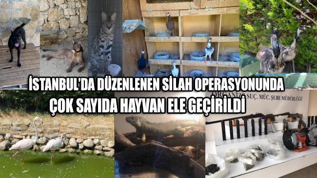 İstanbul'daki operasyonda puma, flamingo, iguana çok sayıda hayvan ele geçirildi