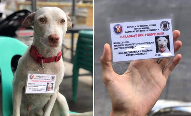 Koronavirüs tedbirleri denetiminde görevli köpeğe kimlik kartı verildi