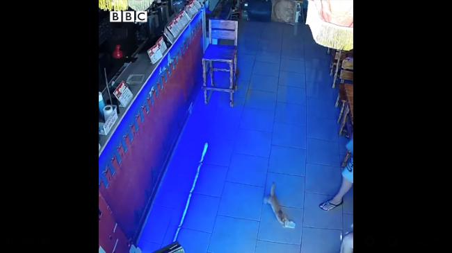 Rusya'da bardan bir deste 'para çalıp' kaçmaya çalışan yavru kedi, iki kez yakayı ele verdi.