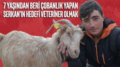 7 yaşından beri çobanlık yapan Serkan'ın hedefi veteriner olmak