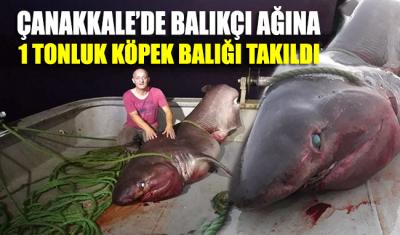Çanakkale'de balıkçı ağına 1 tonluk köpek balığı takıldı