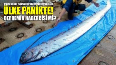 Denizin dibinde yaşayan kürek balığı sahilde yakalandı… Ülke panikte!