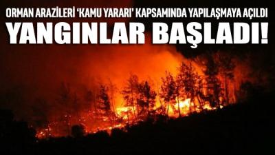 Kanun bir gecede değiştirdiler orman yangınları başladı