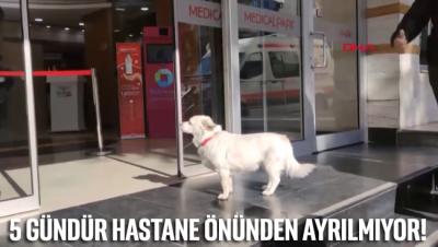 Sahibi tedavi gören köpek, 5 gündür hastane kapısından ayrılmıyor